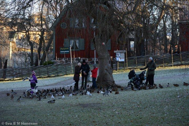 Vid Färgargården matas fåglarna.