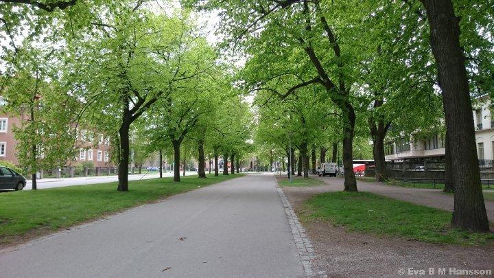 Vacker grönska i Södra promenaden. Norrköping kl 16:22 den 15 maj 2015.